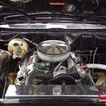 Automodified - Car Show 30